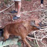 Ein Mann will Hund retten und stürzt dabei in Brunnen