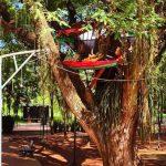 Aus Angst vor Räubern Krippe auf dem Baum platziert