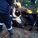 Kuh aus Brunnen gerettet