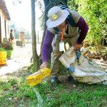 Mücke Aedes aegypti resistent gegen Insektizide