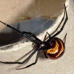 Wie vermeide ich Spinnen im Haus?