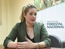 Paraguay: Die Waldproduktion hat eine gute Rendite