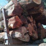 Wegen illegalem Holzhandel zu 3 Jahren Haft verurteilt