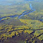 Das südamerikanische Pantanal lässt sich jetzt auch virtuell erleben