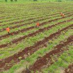 Kredite mit Sonderkonditionen für die Forstwirtschaft