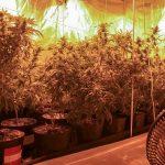 Gewächshaus für Marihuana im Luxusappartement