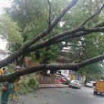 Polizei warnt Kraftfahrer vor umstürzenden Bäumen