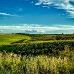 Landwirtschaftlich nutzbare Fläche in Paraguay teurer als in den USA