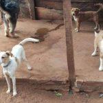 8 verlassene Hunde gerettet