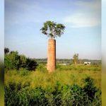 Der Baum aus dem Schornstein