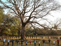 Gesucht wird: Der Baum des Volkes 2021