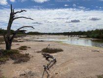 Die Einzigartigkeit der Salzlagunen im Chaco