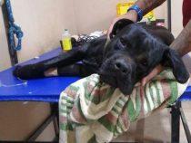 Chaco: Ein Haustiermörder treibt sein Unwesen