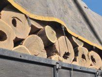 Chaco: Die Sache mit der Abholzung des Palo Santo