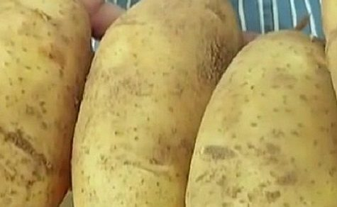 Kartoffel- und Zwiebelbauern klagen über niedrige Umsätze